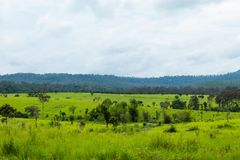 Weide en bomen in Thung Salaeng Luang, Phetchabun in Thailand royalty-vrije stock fotografie