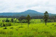 Weide en bomen in Thung Salaeng Luang, Phetchabun in Thailand royalty-vrije stock afbeeldingen