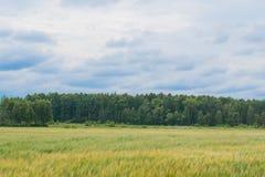 Weide en bos Stock Afbeeldingen
