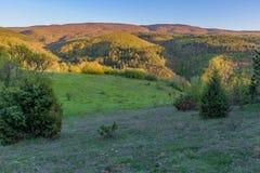 Weide en bos Stock Afbeelding