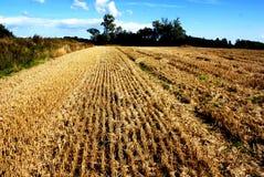 Weide en de blauwe hemel Royalty-vrije Stock Afbeeldingen