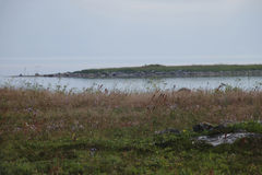 Weide en het eiland in het overzees Royalty-vrije Stock Afbeelding