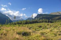 Weide en Hoge Tatras-bergen Stock Foto