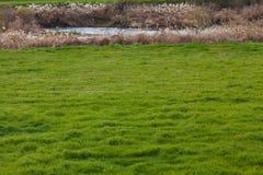Weide en rivier in de vroege lente royalty-vrije stock afbeeldingen
