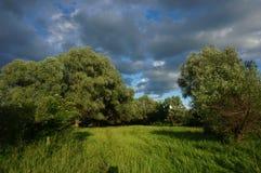 Weide en wilg naast de rivier Stock Foto's