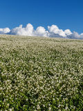 Weide en wolken royalty-vrije stock foto