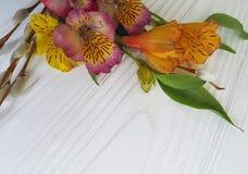 Weide flaumige Alstroemeriakarte oben auf einem weißen hölzernen Hintergrund Stockfotografie