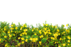 Weide gele bloem Royalty-vrije Stock Foto