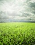 Weide, hemel en zonlicht Stock Foto