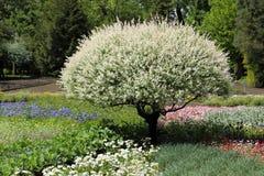 Weide im Garten Lizenzfreies Stockfoto