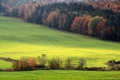 Weide im Herbst Lizenzfreies Stockfoto