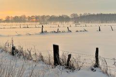 Weide im Winter Lizenzfreie Stockfotos