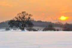 Weide im Winter Lizenzfreie Stockfotografie