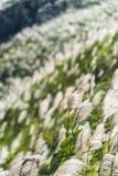 Weide langs de steile helling van een berg stock afbeelding