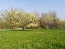 Weide met appel-bomen Royalty-vrije Stock Afbeelding