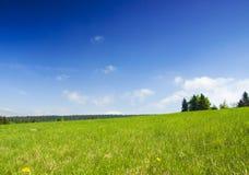 Weide met blauwe hemel. stock afbeelding