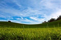 Weide met blauwe hemel en witte wolken Stock Afbeelding