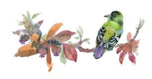 Weide met bloemen en vogel Waterverfillustratie op witte achtergrond Royalty-vrije Stock Fotografie