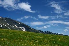 Weide met bloemen over bergen royalty-vrije stock fotografie