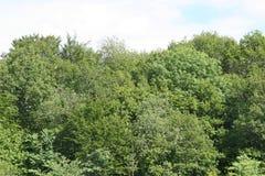 Weide met bomen Royalty-vrije Stock Afbeelding
