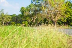 Weide met bomen arround Royalty-vrije Stock Foto