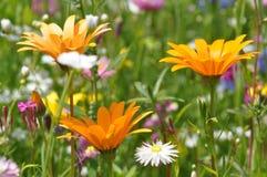 Weide met de zomerbloemen stock foto's