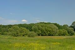 Weide met gele wildflowers, geknoopte wilgen en toher bomen in Vlaanderen stock foto's