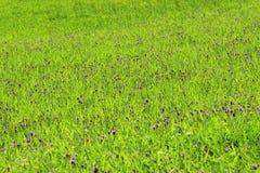 Weide met groen gras Royalty-vrije Stock Foto