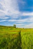 Weide met groen gras en blauwe hemel Stock Foto's