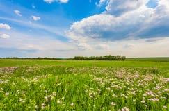 Weide met groen gras en blauwe hemel stock afbeeldingen