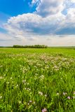 Weide met groen gras en blauwe hemel royalty-vrije stock foto