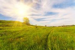 Weide met groen gras en blauwe hemel royalty-vrije stock afbeelding