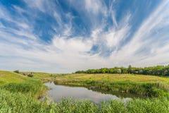 Weide met groen gras en blauwe hemel stock fotografie