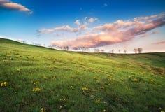 Weide met groen gras en blauwe hemel Stock Foto