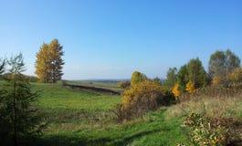Weide met groen gras onder blauwe hemel Stock Foto