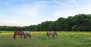 Weide met het bloeiende wilde bloemen en paarden weiden Royalty-vrije Stock Fotografie