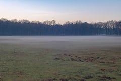 Weide met laag lage mist en naakte bomen Natuurreservaat Nee royalty-vrije stock afbeelding