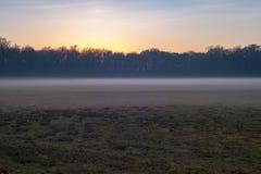Weide met laag lage mist en naakte bomen Natuurreservaat Nee royalty-vrije stock foto
