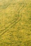 Weide met sporen Stock Foto