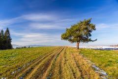 Weide met weg en enige boom Royalty-vrije Stock Foto's