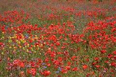 Weide met wilde bloemen stock foto's