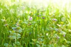 Weide met wildflowers Stock Afbeeldingen