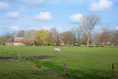 Weide mit Bauernhaus und Pferd Lizenzfreie Stockfotografie