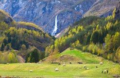 Weide mit Schafen und schönem Wasserfall Stockfoto
