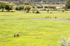 Weide in moerasland stock afbeeldingen
