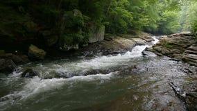 Weide in Ohiopyle Pennsylvania in werking dat wordt gesteld dat stock videobeelden