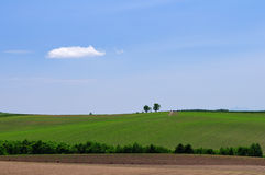 Weide onder blauwe hemel stock afbeelding