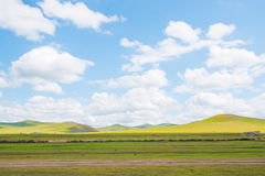 Weide onder blauwe hemel in de Binnenprairie van Mongolië Stock Foto