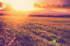 Weide op zonsondergang Royalty-vrije Stock Afbeelding