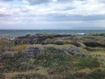 Weide in seno van de pinguinreserve otway in Chili stock foto